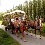 Kutschfahrt in der Hallertau entlang von Hopfengärten